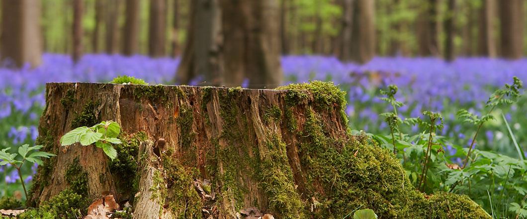 Tree Trimming Removal Stump Grinding Neshanic Station Montgomery Hillsborough Township Nj